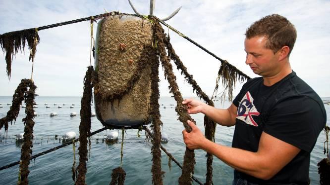 Armada aan tegenslagen voor de visserij, alleen de mosselsector heeft de wind in de zeilen