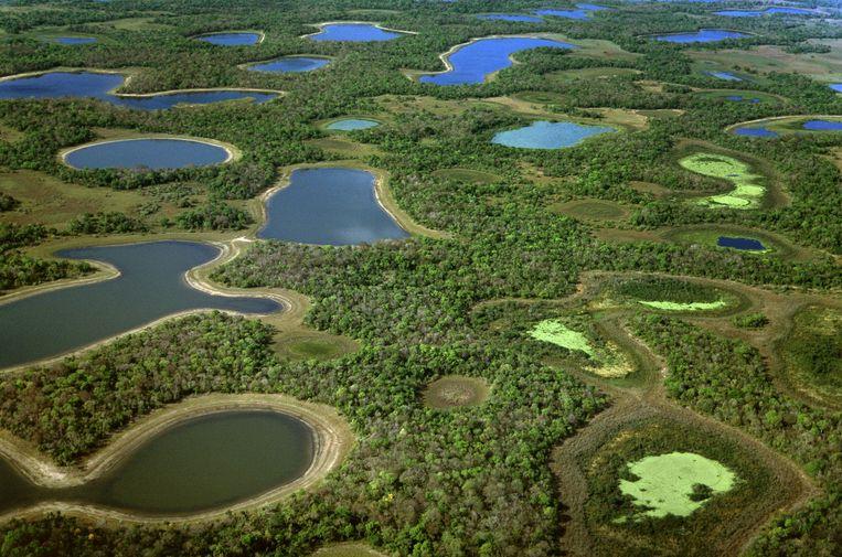 De Pantanal in Brazilië. Beeld Getty