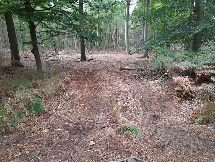 Met zware machines zijn open ruimtes in het bos gecreëerd, maar dat zijn geen nieuwe wandelpaden. Wie de natuur verstoort, zowel planten als dieren, loopt risico een boete te krijgen.