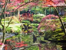Martin Voerman viert ondanks zijn afstand tot de arbeidsmarkt 50-jarig jubileum in de Japanse Tuin