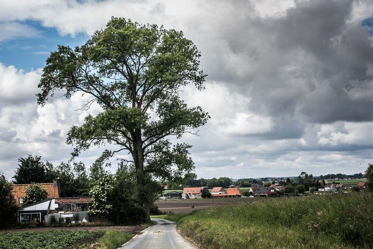 Landbouwgemeente Houthulst telt 10.000 inwoners, onder wie 240 met een andere dan de Belgische nationaliteit. Beeld Bas Bogaerts