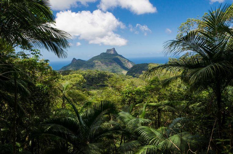 De berg Pedra da Gavea gezien vanuit een aangeplant regenwoud in de Braziliaanse stad Rio de Janeiro. Bossen zijn van groot belang omdat ze het broeikasgas CO2 absorberen.  Beeld Lena Trindade / LightRocket via Getty Images