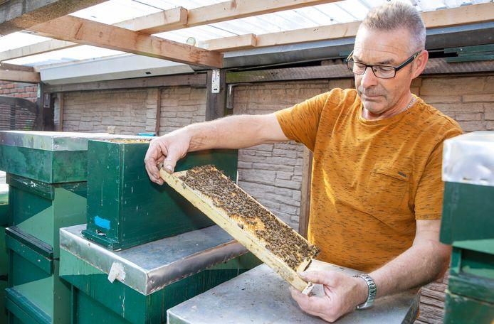 Ben Coppens fokt bijen die nauwelijks steken, maar dit jaar ook nauwelijks honing produceren.