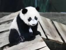 Ouwehands Dierenpark gaat hand op de knip houden: 'We hebben geen perspectief'