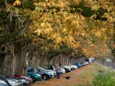 Kort geding dreigt over snoeien kastanjebomen Weeghensingel: 'Dat tast het beeld van de straat aan'