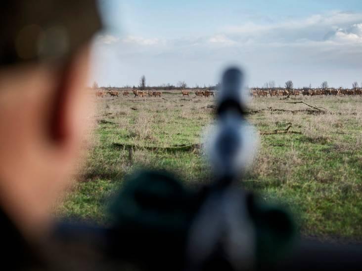 Afschot herten Oostvaardersplassen begint niet meteen: 'In de bronsttijd mag je niet schieten'