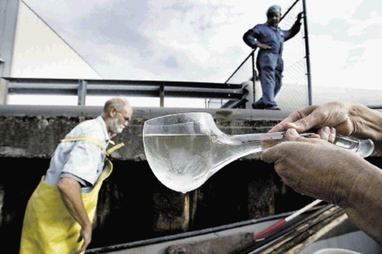 Met een speciale schep vangt stadsecoloog Melchers de kleine ribkwallen. (FOTO'S MAARTJE GEELS ) Beeld
