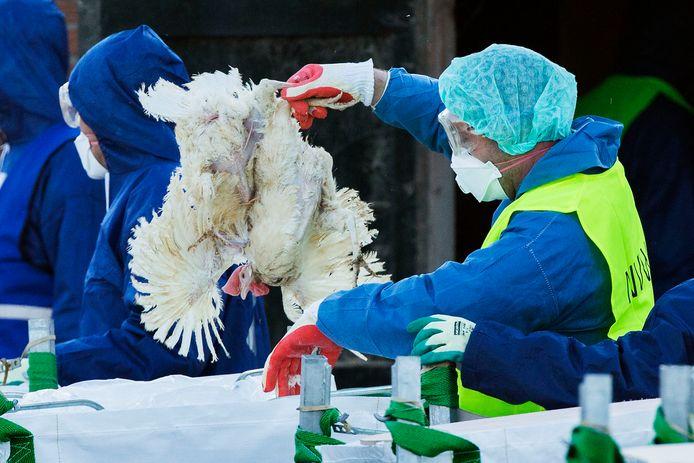 Het is tijd voor verandering bij pluimveebedrijven, betoogt Karel de Buijzer.