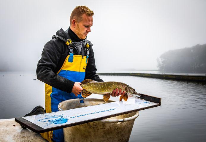 Het visstandonderzoek in de Binnenmaas levert een mooie diversiteit aan vis op.