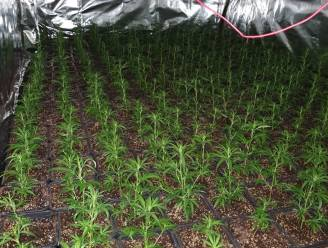 Acht leden van Albanese bende opgepakt voor cannabisplantages in Asse, Charleroi en Namen