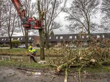 Zwolle gaat strijd aan met essentaksterfte