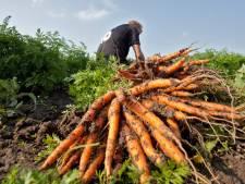 Droge zomer zorgt voor minder wortel, prei en sperziebonen