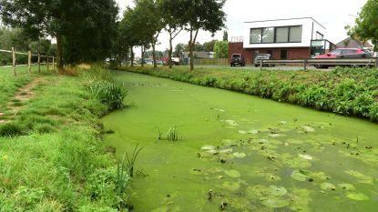 Giftige blauwalgen kleuren Markrivier groen