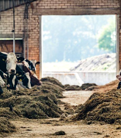 Boeren in Twente en de Achterhoek maken zich grote zorgen om kabinetsplannen: 'Het is niet nodig'