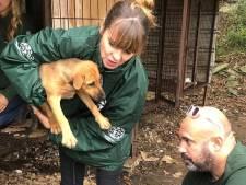 'Helse hondenvleesfokkerij' opgerold in Zuid-Korea: 90 dieren gered