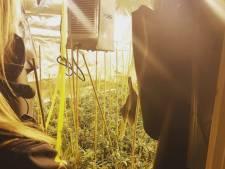 Burgemeester Westervoort sluit drugspand na vondst wietkwekerij