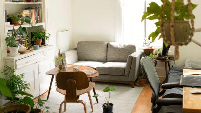 Werken van die luchtzuiverende plantjes echt? (en andere oplossingen voor een fris huis)