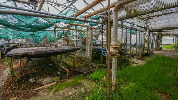 Het vervallen terrein van de voormalige bloemisterij De Snipperling.