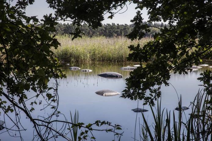 In het Grootmeer is folie ingezet om de watercrassula terug te dringen.