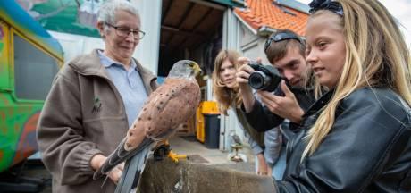 Oog in oog met roofvogels in Marknesse