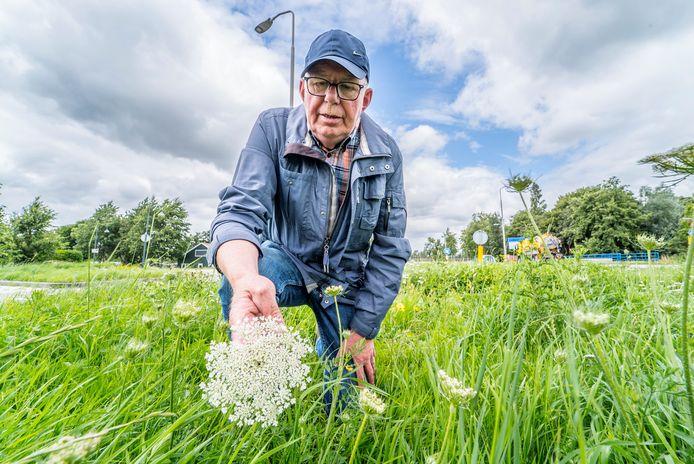 Het witte duizendblad is een plant die Van Kleinwee graag ziet in de Zoetermeerse berm.