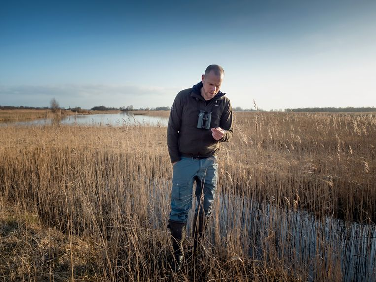 Boswachter Martijn van Schie van Natuurmonumenten laat zien hoe de natuur , de Nieuwkoopse Plassen zich herstelt na ingrijpen tegen stikschofschade.  Beeld Herman Engbers