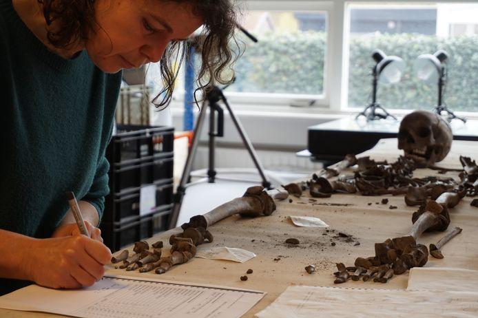 Fysisch antropologe Constance van der Linde onderzoekt een skelet van een kind dat opgegraven werd in Bruinisse.