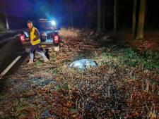 Vrees voor duizend ongelukken op Veluwe door hongerig wild: 'Er moet nu echt ingegrepen worden'