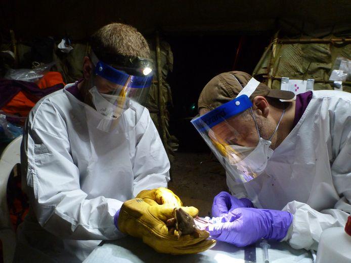 Vincent Munster (r) tijdens een onderzoek bij vleermuizen.