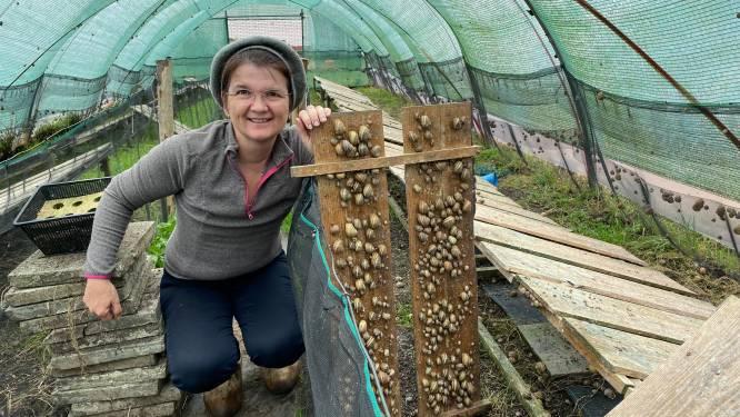 """Nikki richt slakkenkwekerij op in tuin: """"Ik wil escargots terug op de kaart zetten"""""""