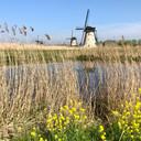 Molens bij Kinderdijk.