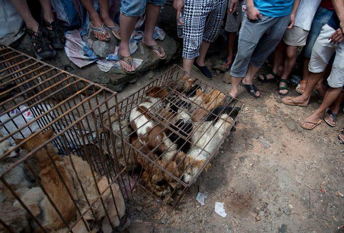 Honden zitten opgesloten in kooien om verkocht te worden op het Chinese hondenvleesfestival.