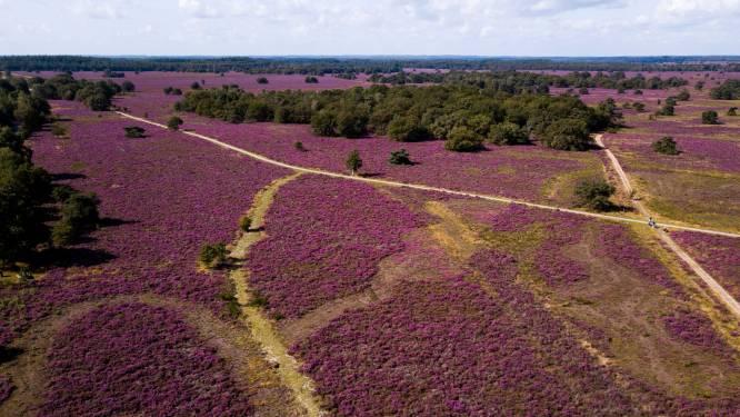 Hoogleraar over stikstofcrisis: 'Zet mes in 160 beschermde natuurgebieden'