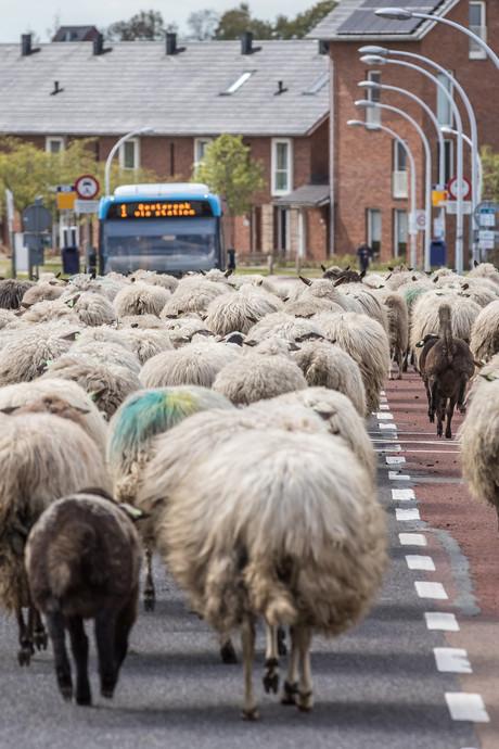 Een oorverdovend gemekker in Stadshagen