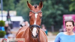 Airbagvest redt Belgische eventingamazone bij zware val, paard moet worden afgemaakt