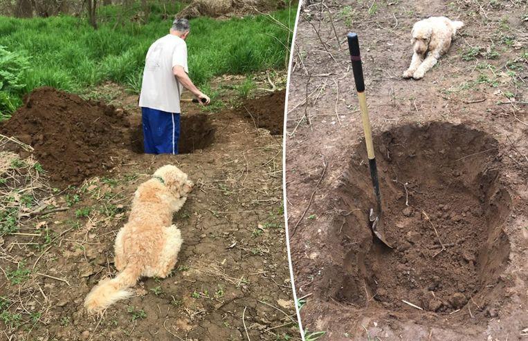 Franklin Hardy deelde deze foto's van zijn vader die het graf van zijn hond graaft terwijl die toekijkt.