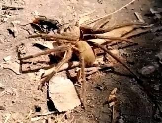 Hé wesp, waar ga je met die enorme spin naartoe?
