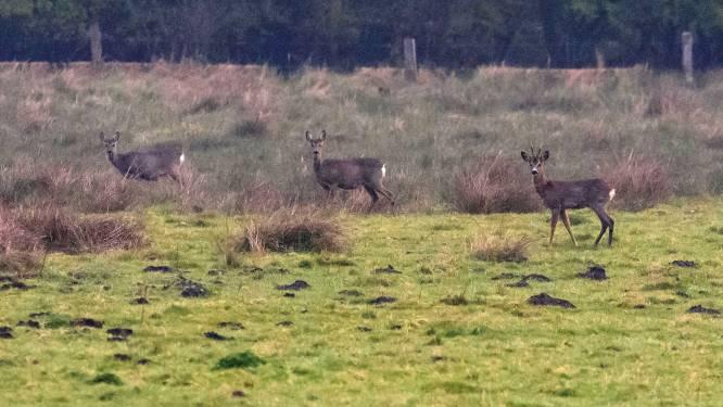 Drukte in de natuur zit de jagers West-Twente dwars: te weinig wild afgeschoten