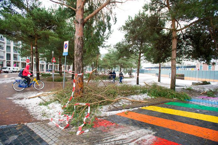 Het Stationsplein in Apeldoorn is gedeeltelijk afgezet nadat de takken van de naaldbomen het begaven.