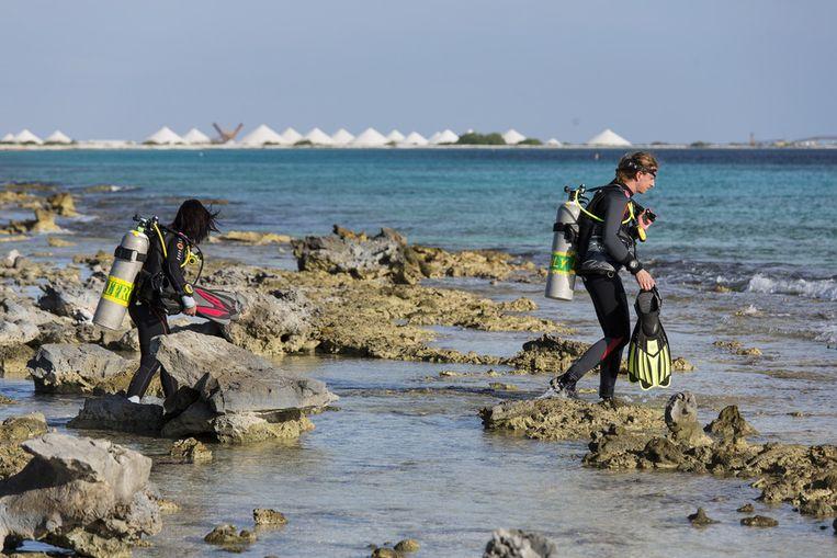 Duiken bij de zoutpannen van het Pekelmeer in Kralendijk, Bonaire. Door de honderden sportduikers loopt het rif bij het eiland schade op. Beeld ANP