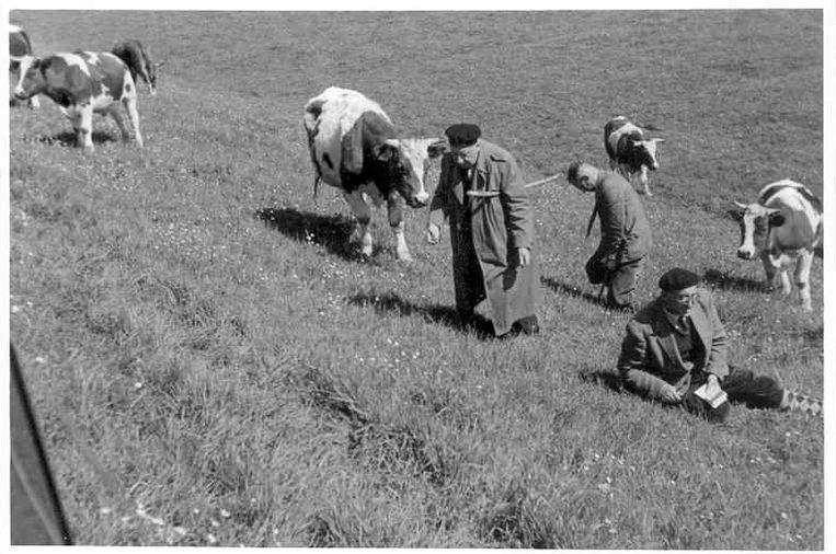 Een botanische graslandexcursie in het Binnenveld van Wageningen, nabij de Ossekampen in juni 1946. De man met de schoudertas is D.M. de Vries, mede-initiatiefnemer van de aanleg van het proefveld in 1958. Beeld WUR