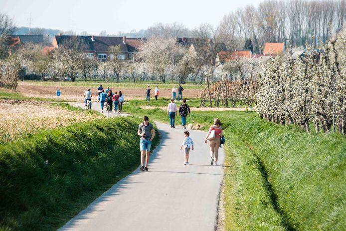 Bloesemwandelingen in Haspengouw vorig jaar.  In 2020 geldt dit als een niet-essentiële verplaatsing en is dus verboden.