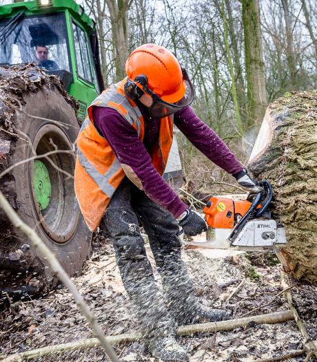 Online petitie tegen bomenkap langs de Oude Maas gaat als een trein