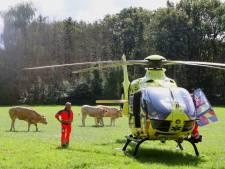 Wielrenner gewond bij ongeval in Cromvoirt, traumahelikopter landt tussen de koeien