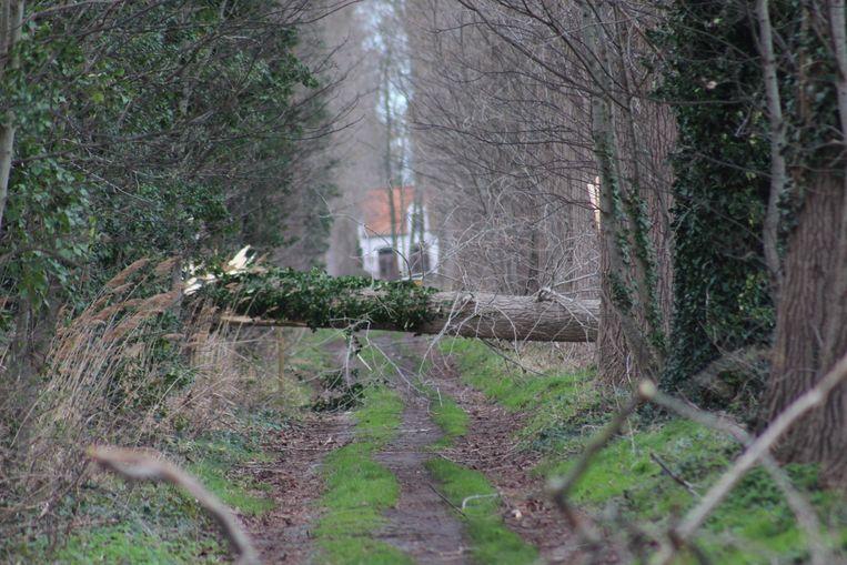 Omgewaaide bomen versperden doorgangen: hier in Sint-Kruis