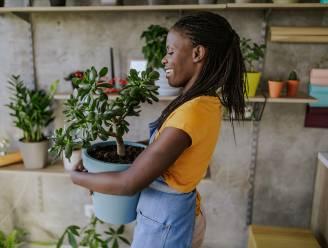 Meer groen in huis? Deze plant past perfect bij jou (en je levensstijl)