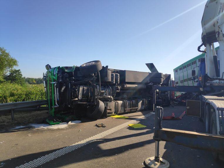 De vrachtwagen met koeien kantelde op de E17 ter hoogte van Gentbrugge.