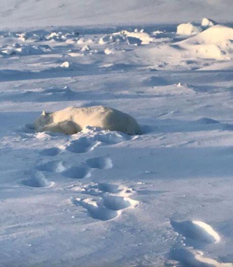 Man overleeft ijsbeeraanval op Spitsbergen, eerste incident sinds dood Amsterdamse Job (39)