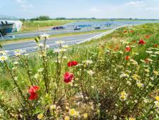 De honey highway staat weer vol in bloei