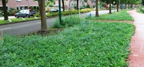 In Rilland ontwikkelde vijand van de eikenprocessierups valt in de prijzen